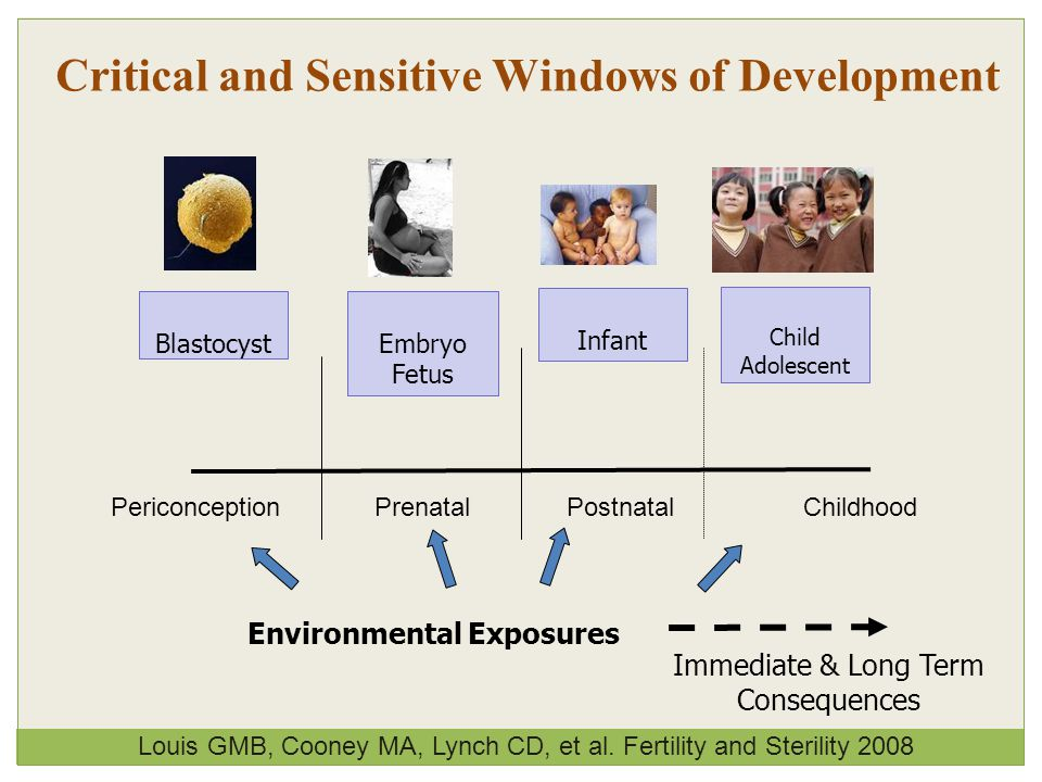 Critical and Sensitive Windows of Development PericonceptionPrenatalPostnatal BlastocystEmbryo Fetus Infant Child Adolescent Environmental Exposures Immediate & Long Term Consequences Louis GMB, Cooney MA, Lynch CD, et al.