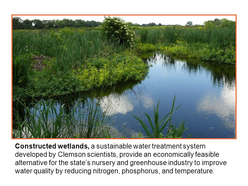 Constructed wetlands, a sustainable water treatment system developed by Clemson scientists, provide an economically feasible alternative for the state's nursery and greenhouse industry to improve water quality by reducing nitrogen, phosphorus, and temperature.