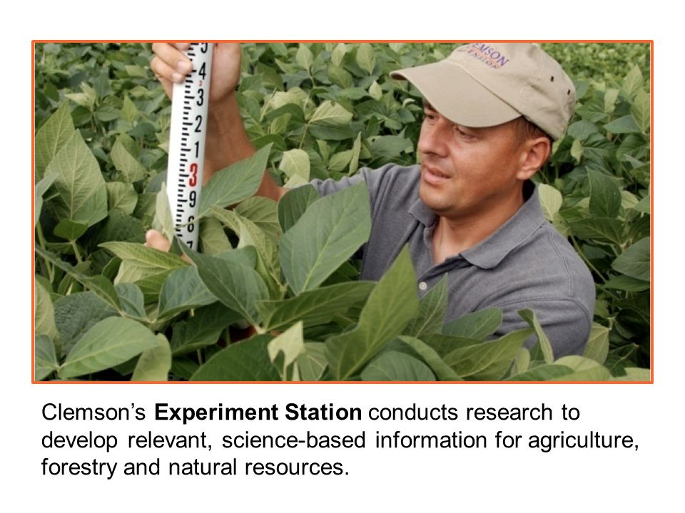Clemson's Experiment Station conducts research to develop relevant, science-based information for agriculture, forestry and natural resources.
