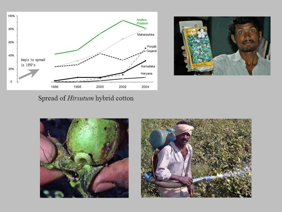 Spread of Hirsutum hybrid cotton