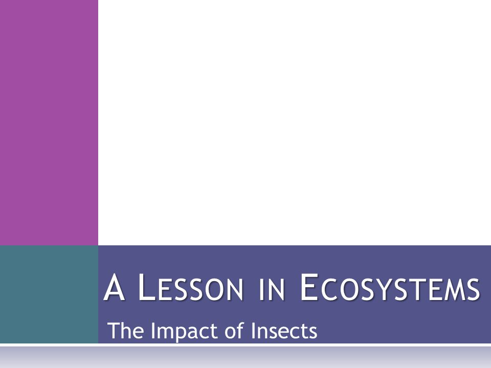 The Impact of Insects A L ESSON IN E COSYSTEMS