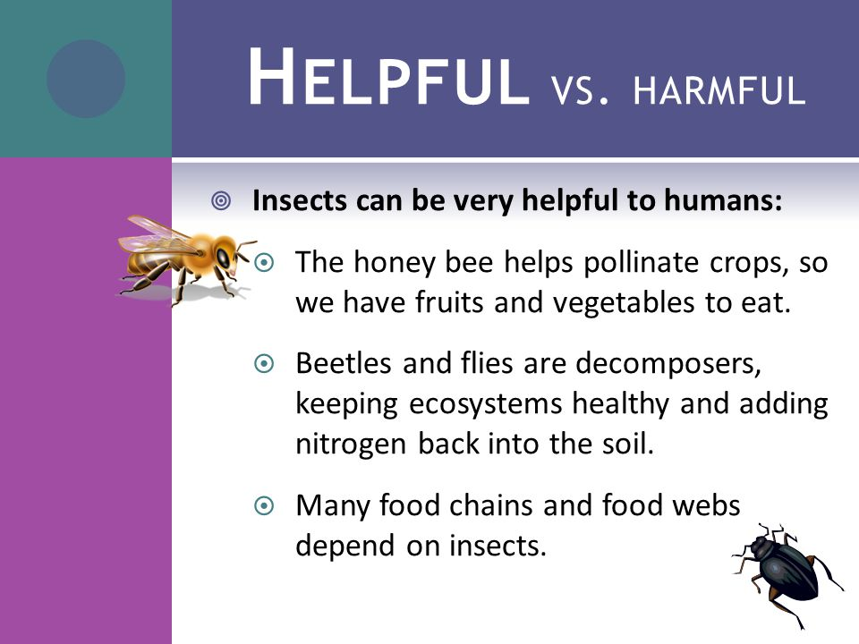 H ELPFUL VS. HARMFUL  Insects can be very helpful to humans:  The honey bee helps pollinate crops, so we have fruits and vegetables to eat.  Beetle