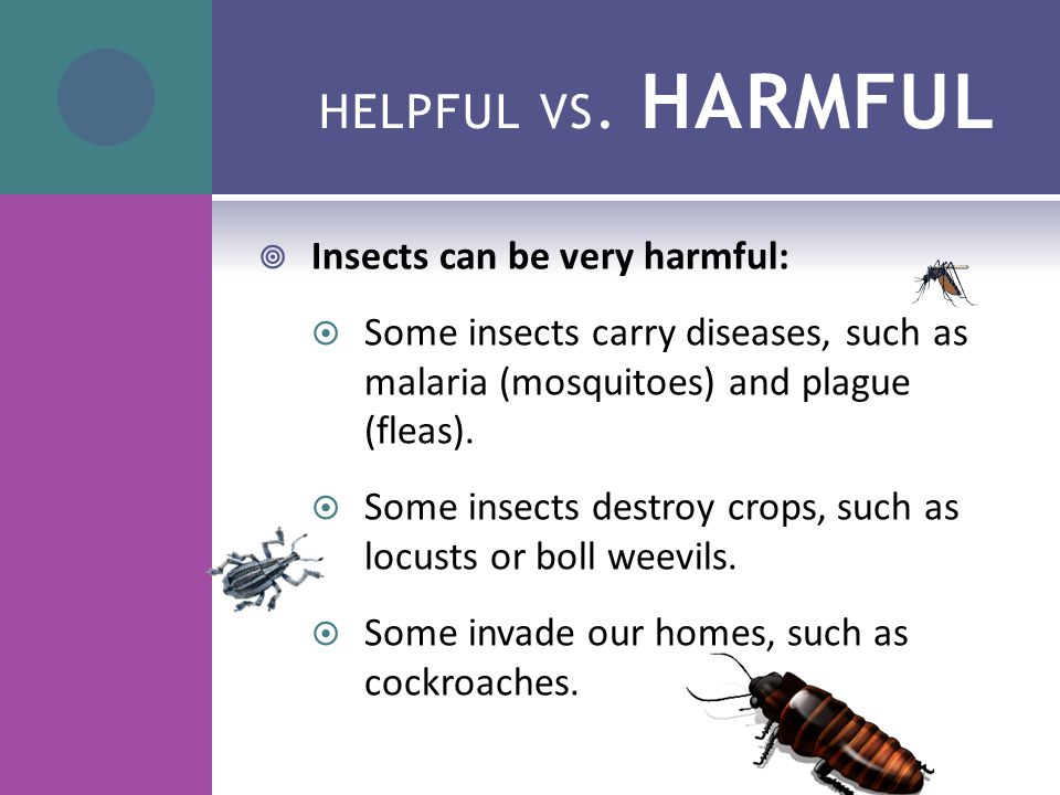 HELPFUL VS. HARMFUL  Insects can be very harmful:  Some insects carry diseases, such as malaria (mosquitoes) and plague (fleas).  Some insects dest