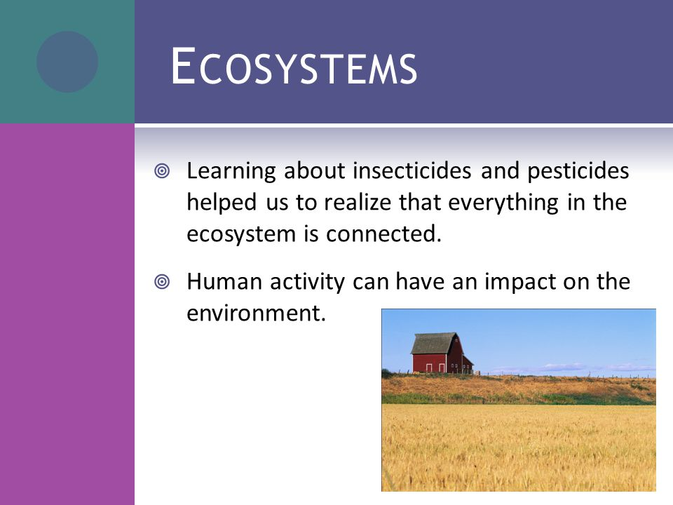 E COSYSTEMS  Learning about insecticides and pesticides helped us to realize that everything in the ecosystem is connected.  Human activity can have