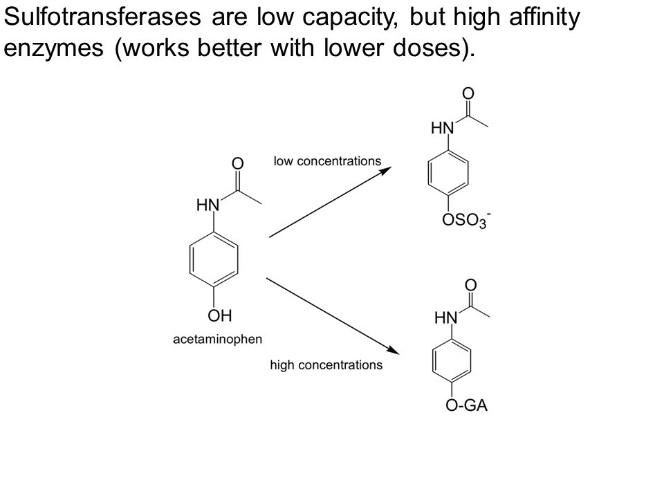 Sulfotransferases are low capacity, but high affinity enzymes (works better with lower doses).