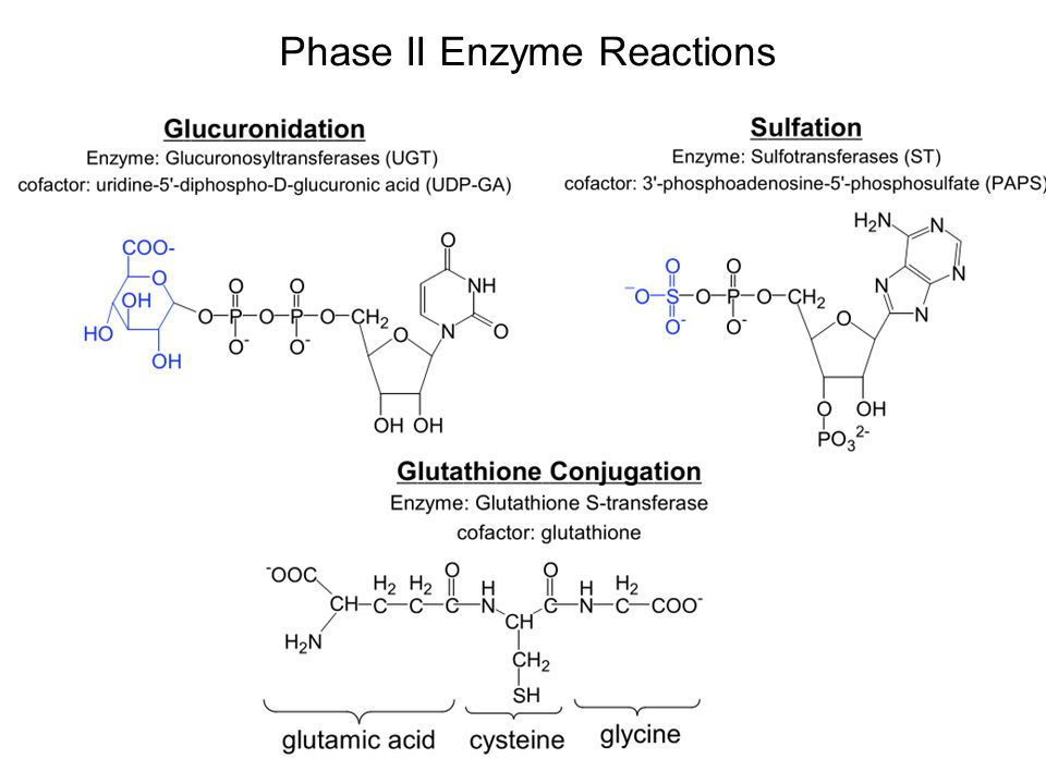 Phase II Enzyme Reactions