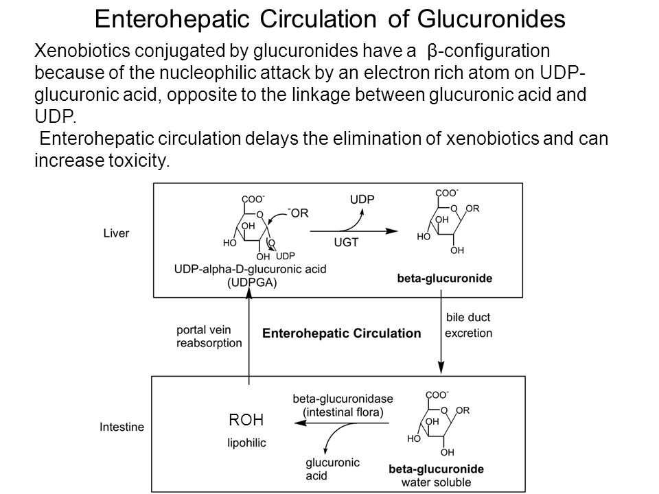 ROH Xenobiotics conjugated by glucuronides have a β-configuration because of the nucleophilic attack by an electron rich atom on UDP- glucuronic acid, opposite to the linkage between glucuronic acid and UDP.