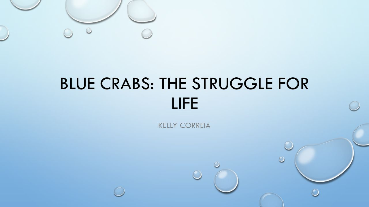 BLUE CRABS: THE STRUGGLE FOR LIFE KELLY CORREIA