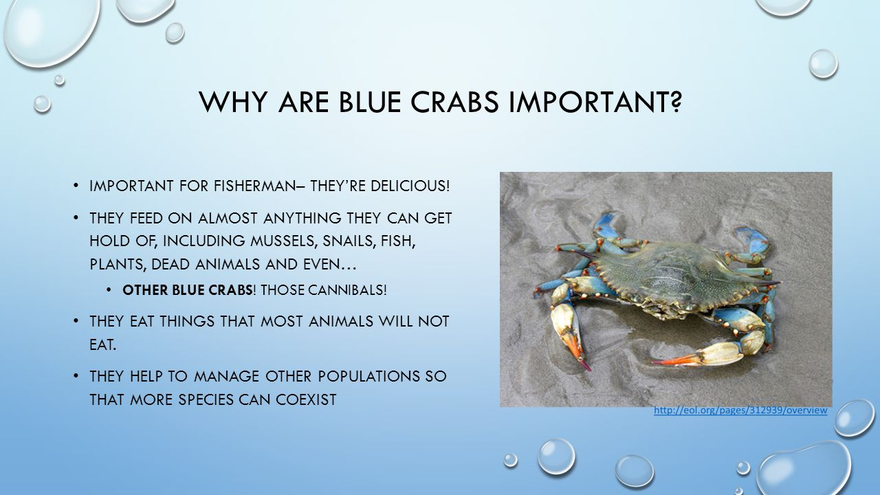 WHERE DO CRABS LIVE.ESTUARIES. WHY ARE THEY IMPORTANT?.