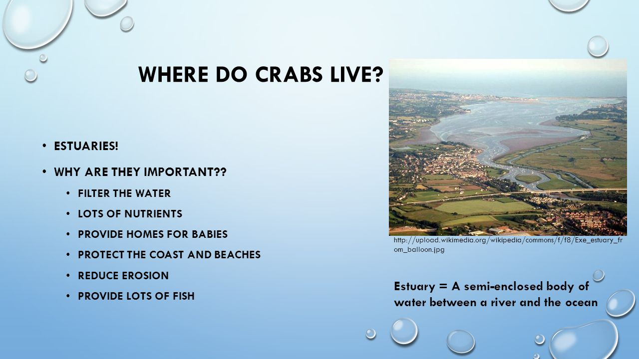 WHERE DO CRABS LIVE. ESTUARIES. WHY ARE THEY IMPORTANT .