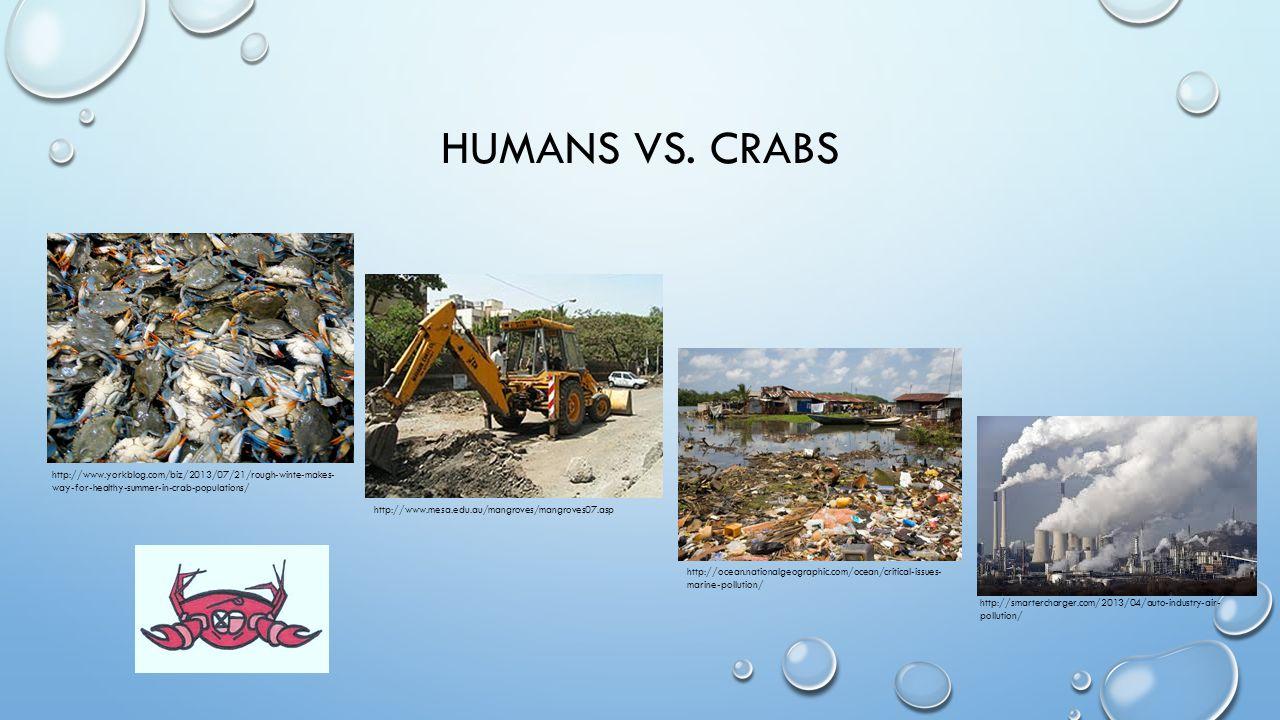 HUMANS VS. CRABS http://www.yorkblog.com/biz/2013/07/21/rough-winte-makes- way-for-healthy-summer-in-crab-populations/ http://www.mesa.edu.au/mangrove