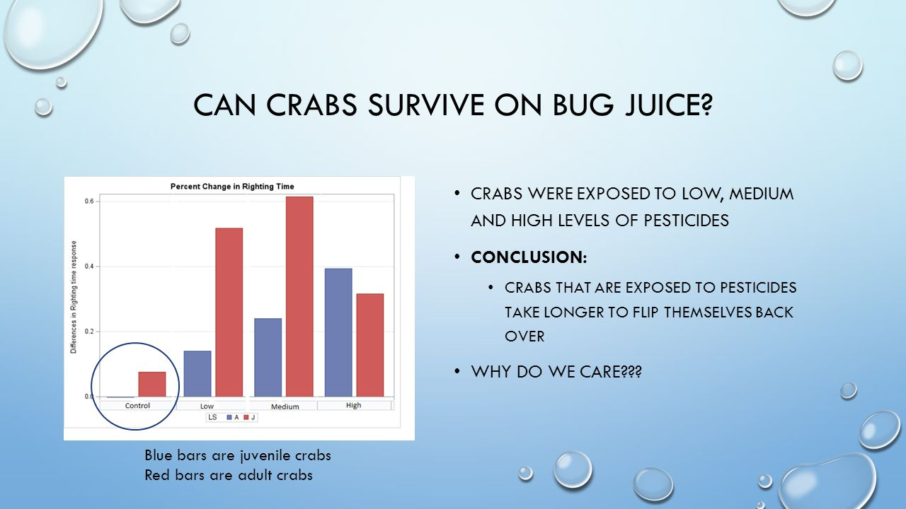 CAN CRABS SURVIVE ON BUG JUICE.