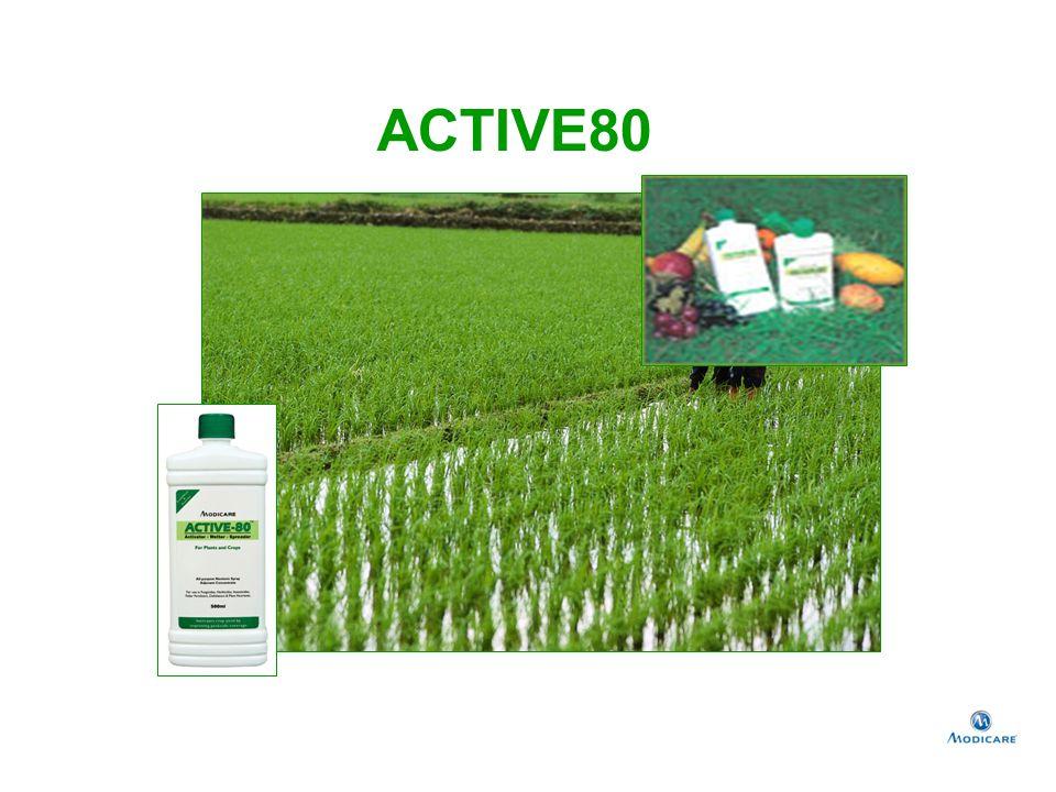 ACTIVE80