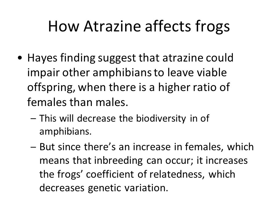 How Atrazine affects frogs Hayes finding suggest that atrazine could impair other amphibians to leave viable offspring, when there is a higher ratio of females than males.