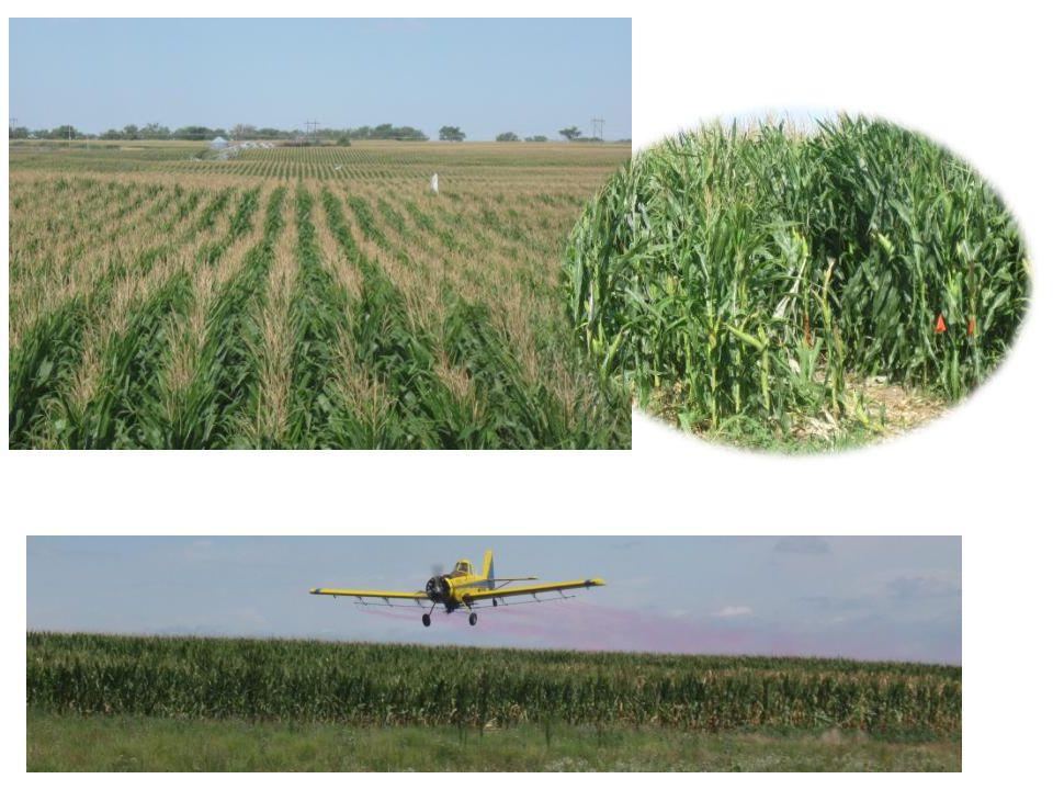 Corn Fungicide Studies