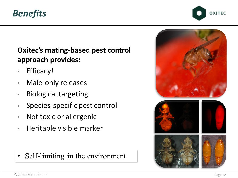 Page 12© 2014 Oxitec Limited Benefits Oxitec's mating-based pest control approach provides: Efficacy.