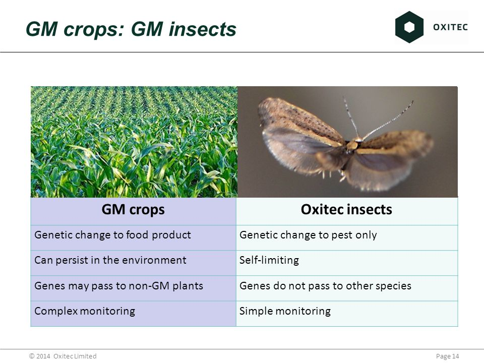 Page 14© 2014 Oxitec Limited GM crops: GM insects GM cropsOxitec insects Genetic change to food productGenetic change to pest only Can persist in the environmentSelf-limiting Genes may pass to non-GM plantsGenes do not pass to other species Complex monitoringSimple monitoring