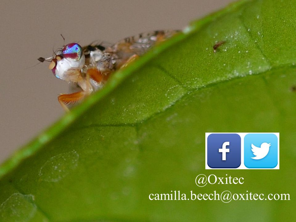 Page 18© 2014 Oxitec Limited Thank you www.oxitec.com @Oxitec camilla.beech@oxitec.com