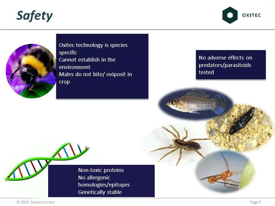 Page 7© 2014 Oxitec Limited Oxitec technology is species specific Cannot establish in the environment Males do not bite/ oviposit in crop Safety No adverse effects on predators/parasitoids tested Non-toxic proteins No allergenic homologies/epitopes Genetically stable