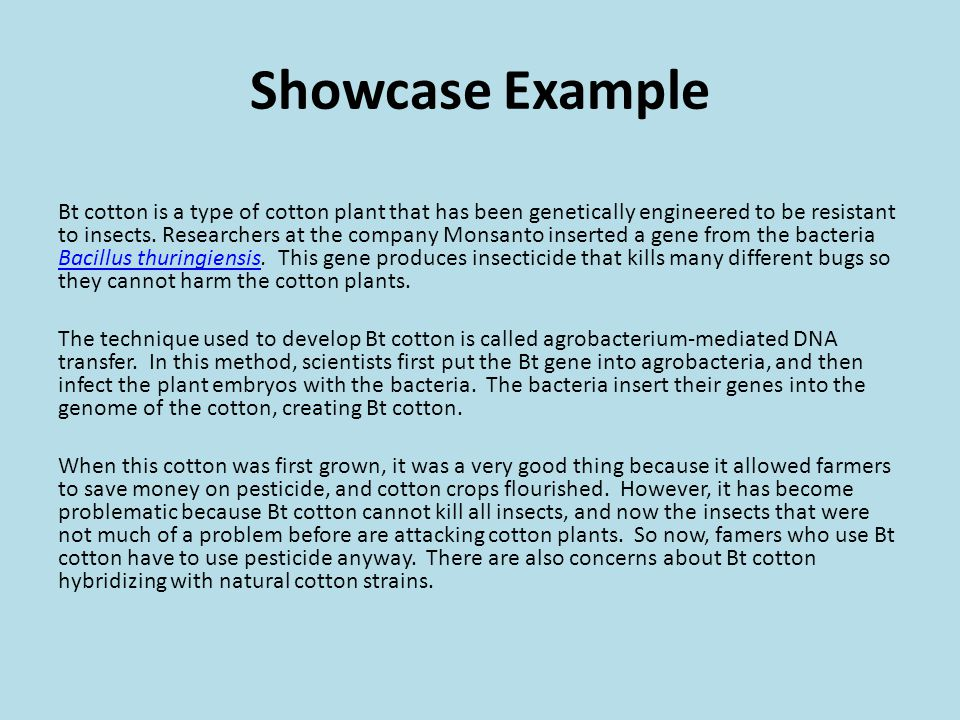 Showcase Example Bt cotton is a type of cotton plant that has been genetically engineered to be resistant to insects.