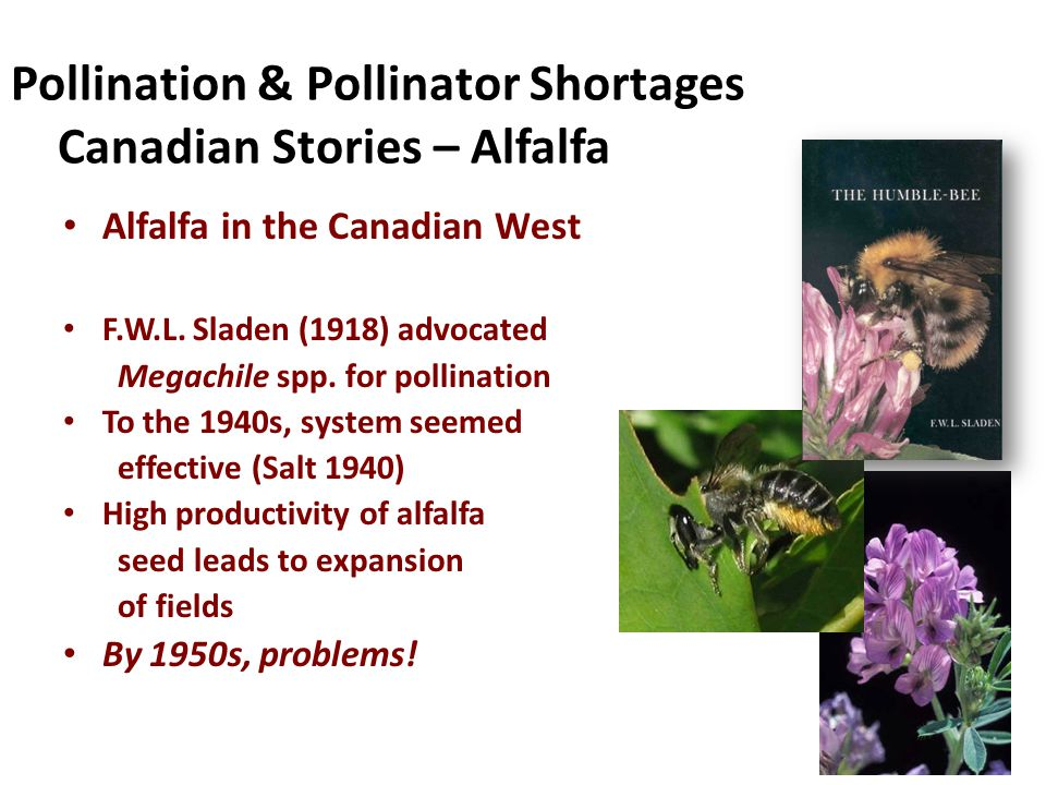 Pollination & Pollinator Shortages Canadian Stories – Alfalfa Alfalfa in the Canadian West F.W.L.