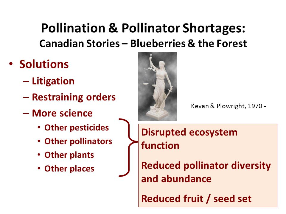 Solutions – Litigation – Restraining orders – More science Other pesticides Other pollinators Other plants Other places Pollination & Pollinator Shortages: Canadian Stories – Blueberries & the Forest Disrupted ecosystem function Reduced pollinator diversity and abundance Reduced fruit / seed set Kevan & Plowright, 1970 -