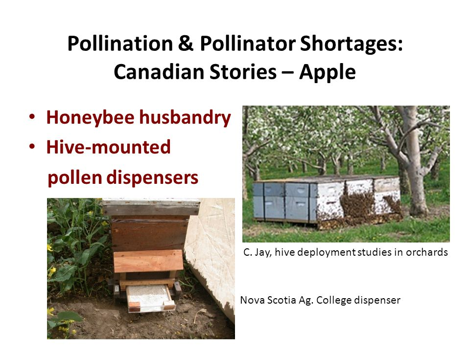 Honeybee husbandry Hive-mounted pollen dispensers Pollination & Pollinator Shortages: Canadian Stories – Apple C.