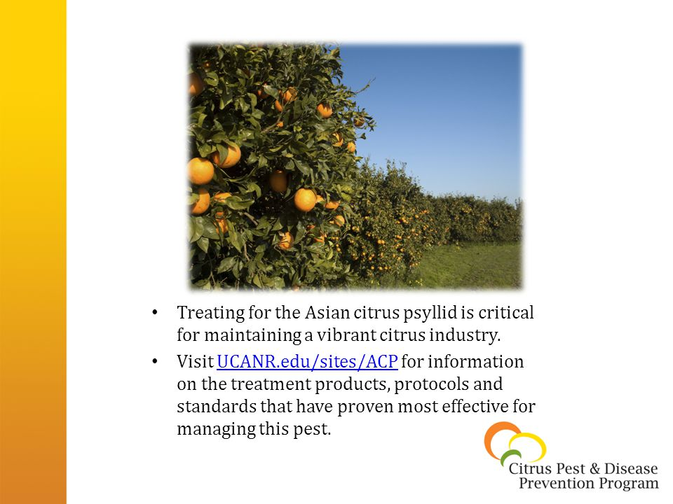 Treating for the Asian citrus psyllid is critical for maintaining a vibrant citrus industry.