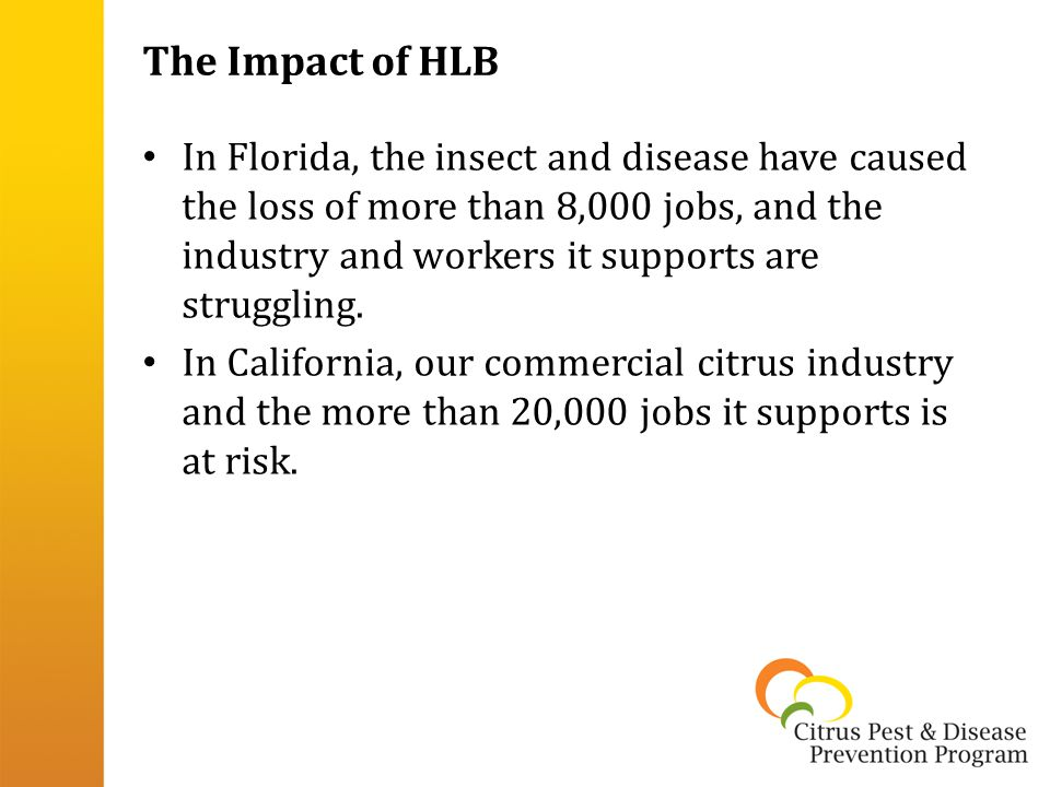 The Impact of HLB In Florida, the insect and disease have caused the loss of more than 8,000 jobs, and the industry and workers it supports are struggling.
