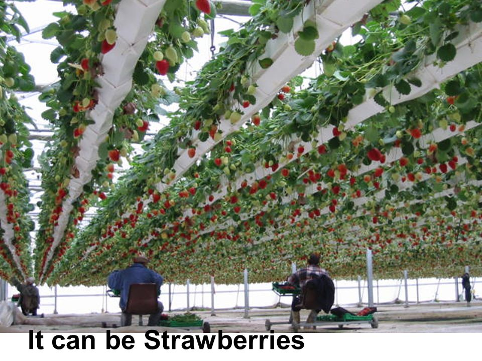 It can be Strawberries