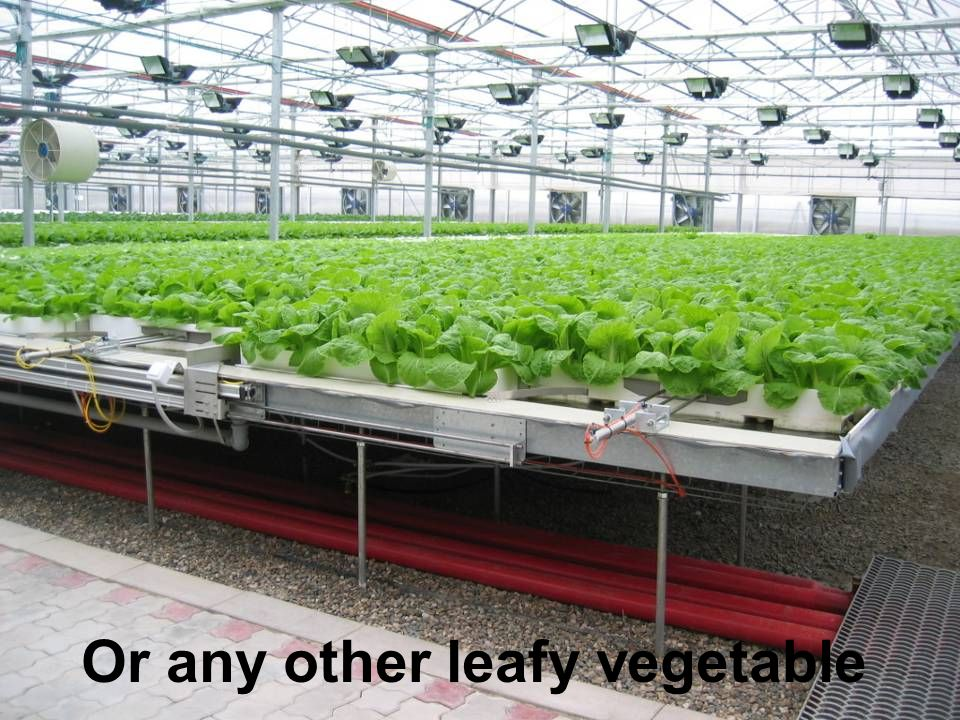 Or any other leafy vegetable