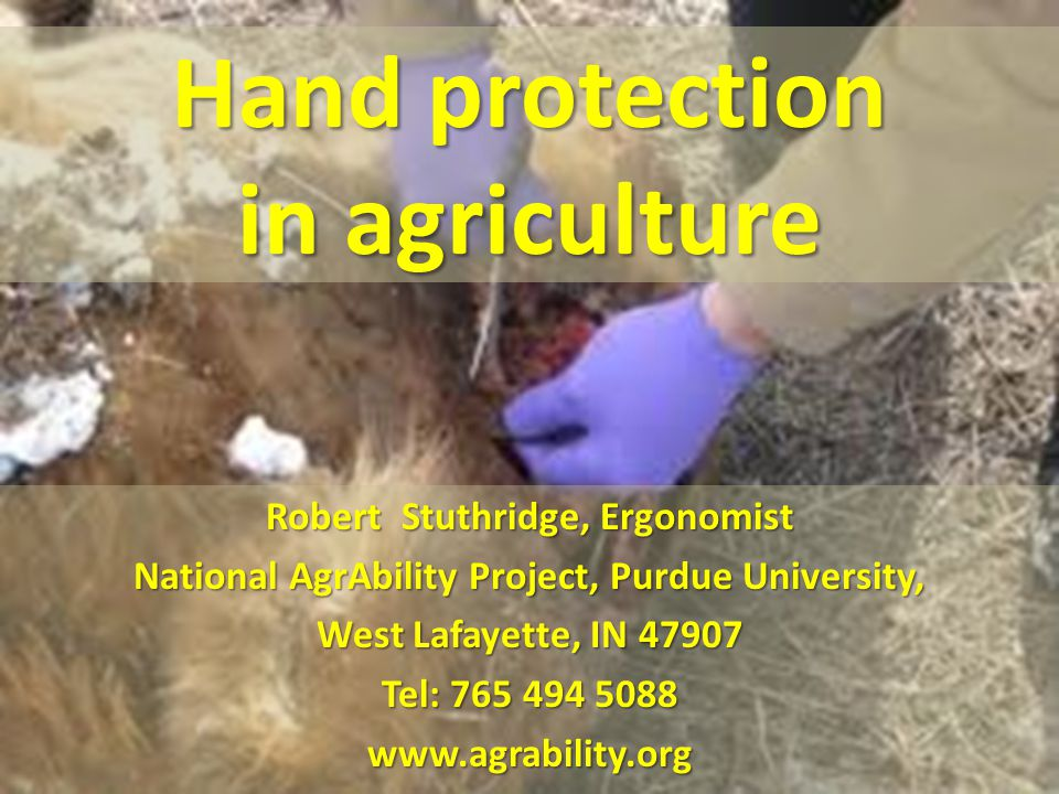 Hand protection in agriculture Robert Stuthridge, Ergonomist National AgrAbility Project, Purdue University, West Lafayette, IN 47907 Tel: 765 494 5088 www.agrability.org