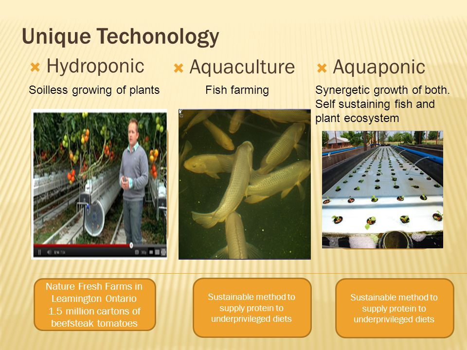 Unique Techonology  Hydroponic Soilless growing of plants  Aquaculture Fish farming  Aquaponic Synergetic growth of both.