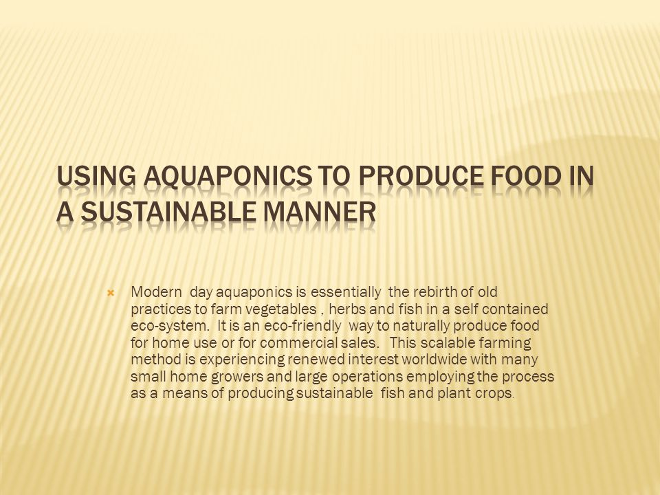 Modern day aquaponics is essentially the rebirth of old practices to farm vegetables, herbs and fish in a self contained eco-system.