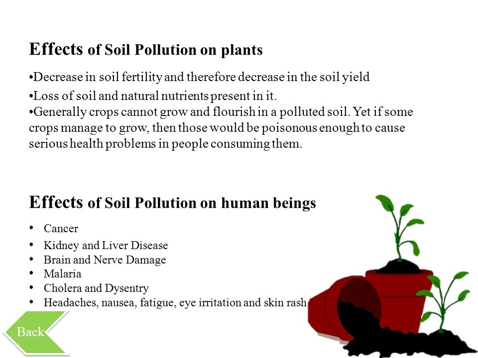 Effects of Soil Pollution on plants Decrease in soil fertility and therefore decrease in the soil yield Loss of soil and natural nutrients present in it.