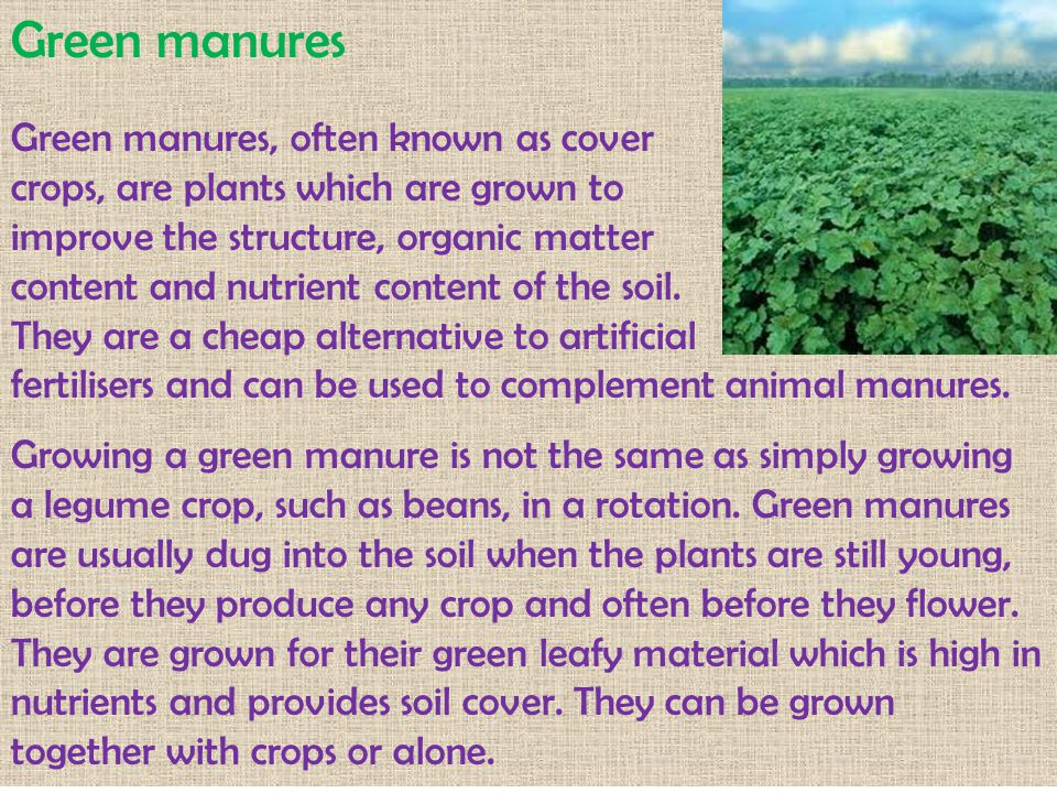 Green manures Green manures, often known as cover crops, are plants which are grown to improve the structure, organic matter content and nutrient cont