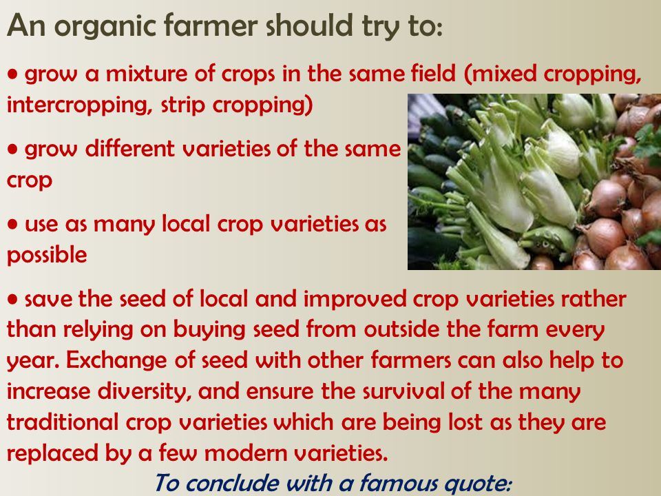 An organic farmer should try to: grow a mixture of crops in the same field (mixed cropping, intercropping, strip cropping) grow different varieties of
