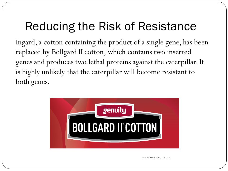 Reducing the Risk of Resistance In addition, cotton farmers plant a 'refuge crop' of pea plants in a field nearby, so that moths that may have one recessive allele for resistance to Bollgard II continue to interbreed with moths who feed on the 'refuge crop', to reduce the chances of in- breeding caterpillars with double recessive alleles, which could confer resistance.