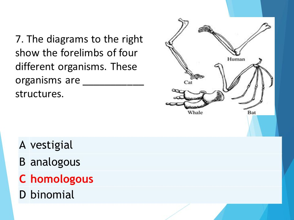 Avestigial Banalogous Chomologous Dbinomial 7. The diagrams to the right show the forelimbs of four different organisms. These organisms are _________