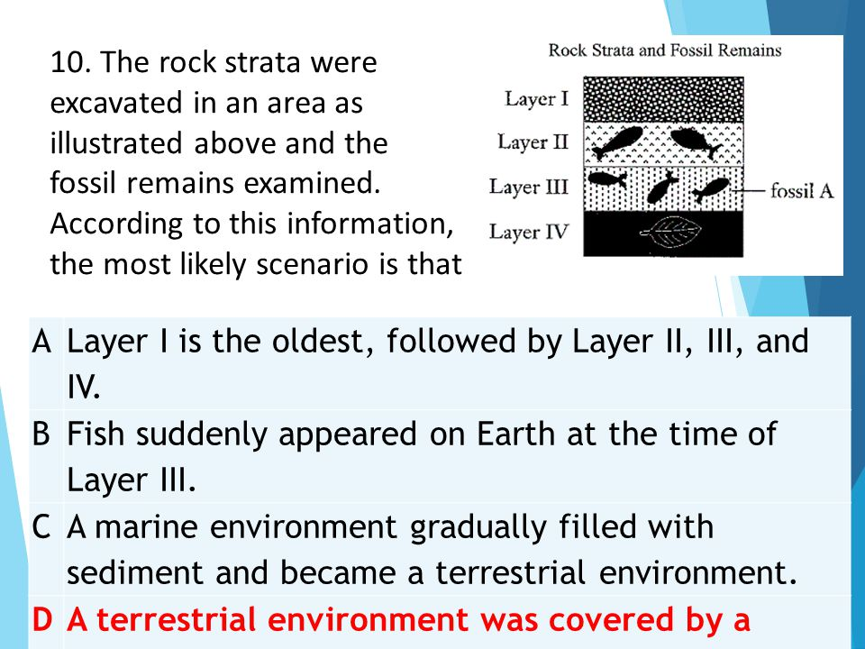 A Layer I is the oldest, followed by Layer II, III, and IV. B Fish suddenly appeared on Earth at the time of Layer III. C A marine environment gradual