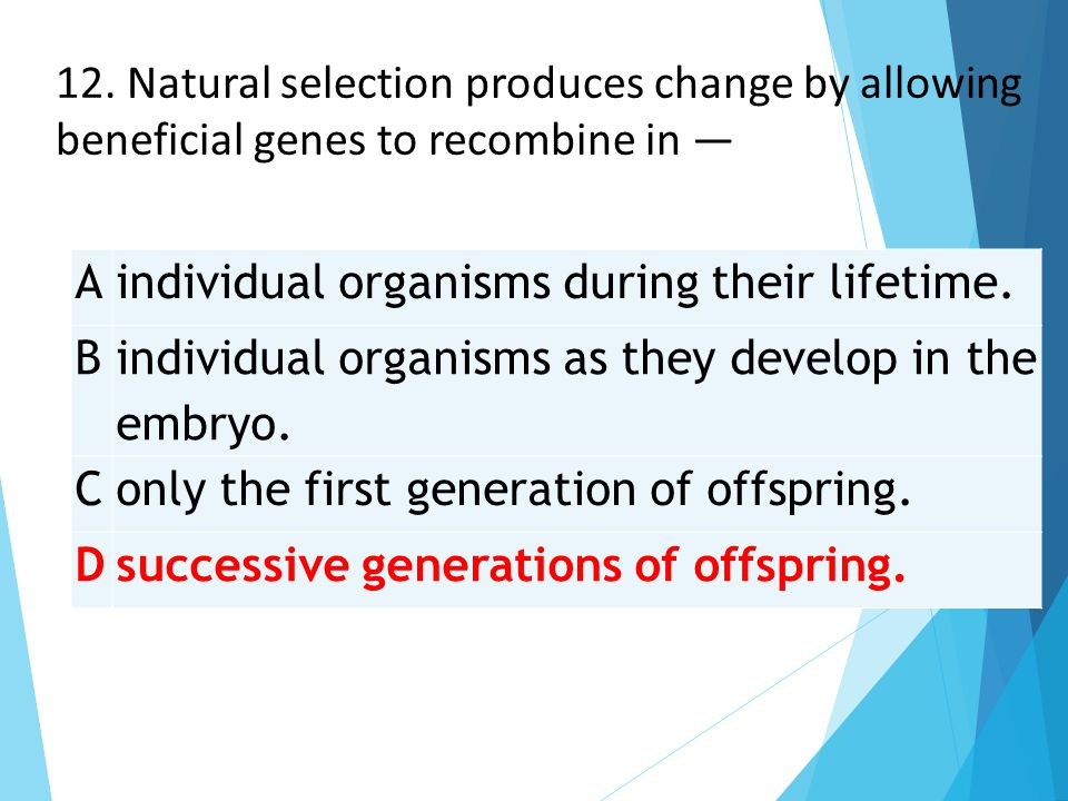 Aindividual organisms during their lifetime. B individual organisms as they develop in the embryo. Conly the first generation of offspring. Dsuccessiv