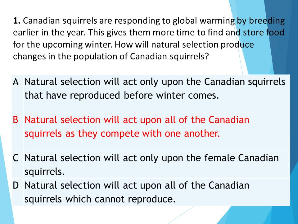 A Natural selection will act only upon the Canadian squirrels that have reproduced before winter comes. B Natural selection will act upon all of the C