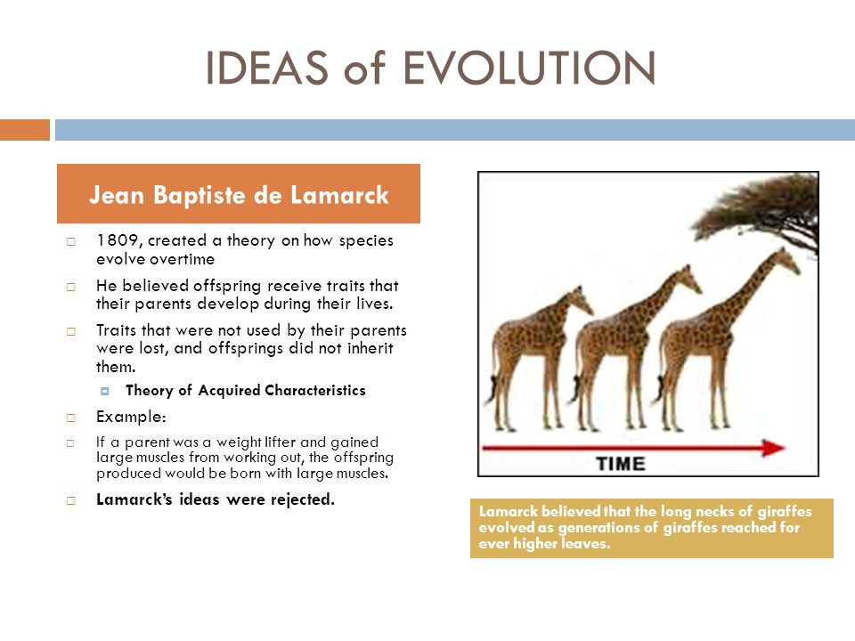 IDEAS of EVOLUTION  1809, created a theory on how species evolve overtime  He believed offspring receive traits that their parents develop during th