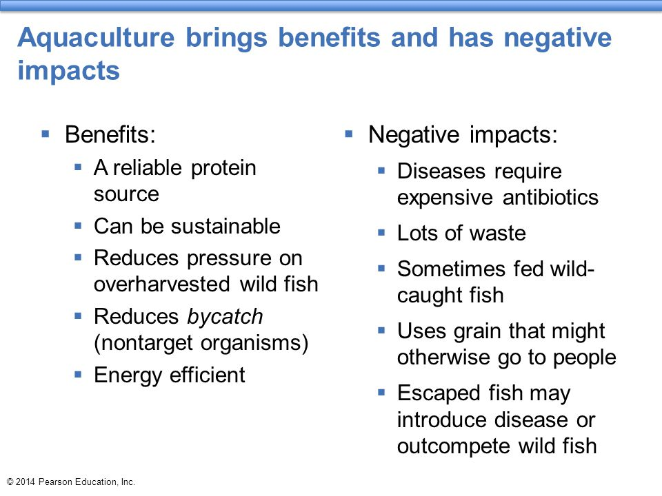 Aquaculture brings benefits and has negative impacts  Benefits:  A reliable protein source  Can be sustainable  Reduces pressure on overharvested wild fish  Reduces bycatch (nontarget organisms)  Energy efficient  Negative impacts:  Diseases require expensive antibiotics  Lots of waste  Sometimes fed wild- caught fish  Uses grain that might otherwise go to people  Escaped fish may introduce disease or outcompete wild fish