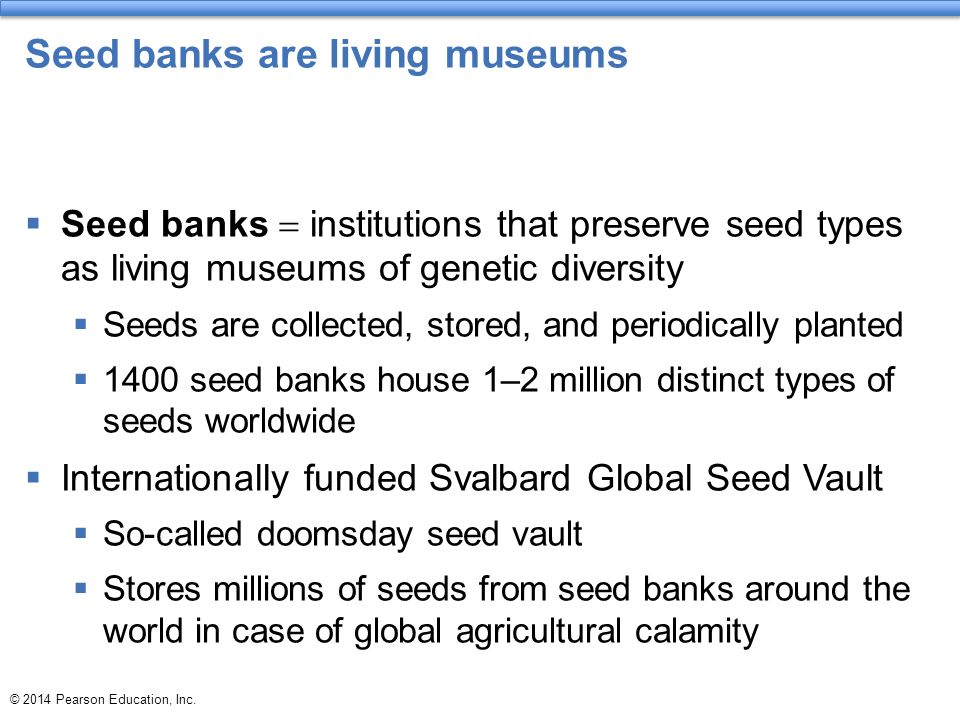 Seed banks are living museums  Seed banks  institutions that preserve seed types as living museums of genetic diversity  Seeds are collected, store