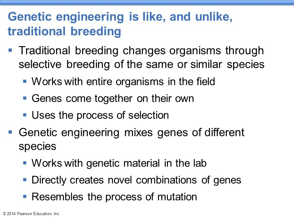 Genetic engineering is like, and unlike, traditional breeding  Traditional breeding changes organisms through selective breeding of the same or simil