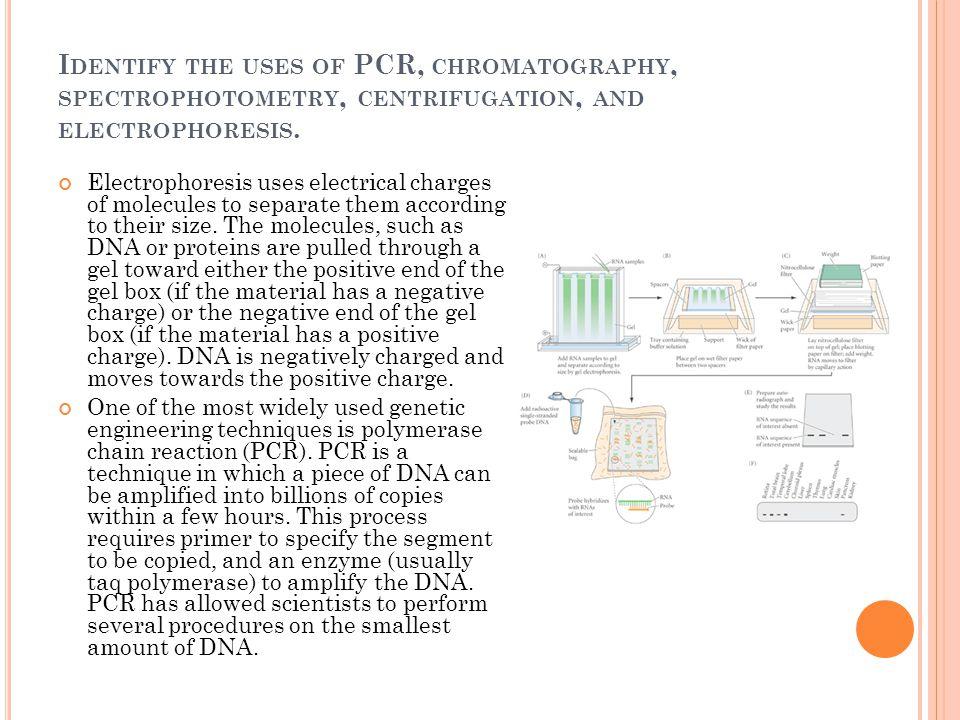 I DENTIFY THE USES OF PCR, CHROMATOGRAPHY, SPECTROPHOTOMETRY, CENTRIFUGATION, AND ELECTROPHORESIS. Electrophoresis uses electrical charges of molecule