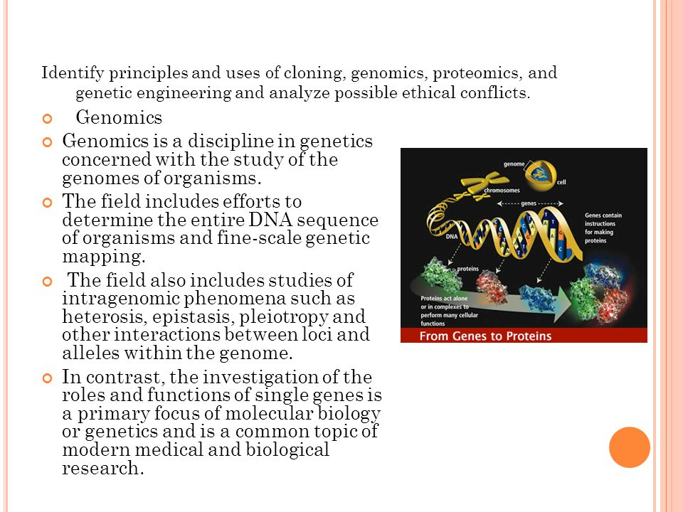 Identify principles and uses of cloning, genomics, proteomics, and genetic engineering and analyze possible ethical conflicts. Genomics Genomics is a