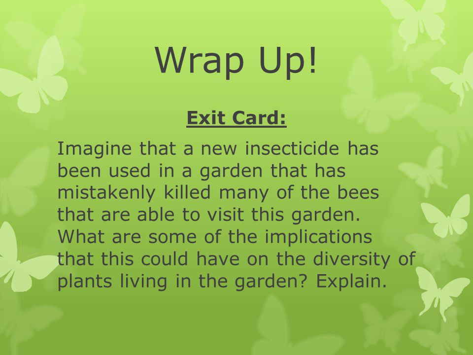Wrap Up! Exit Card: Imagine that a new insecticide has been used in a garden that has mistakenly killed many of the bees that are able to visit this g