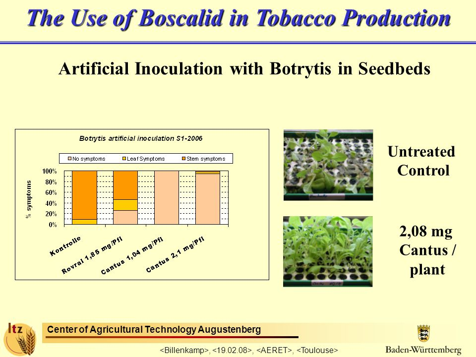 Center of Agricultural Technology Augustenberg,,, Artificial Inoculation with Botrytis in Seedbeds The Use of Boscalid in Tobacco Production Untreated Control 2,08 mg Cantus / plant
